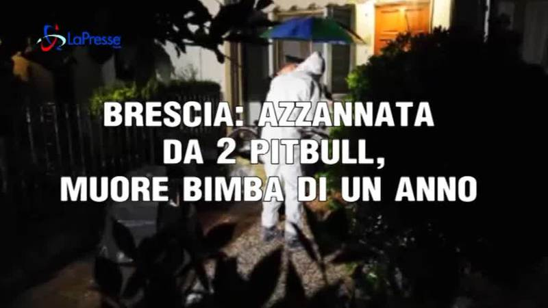 BRESCIA: AZZANNATA DA DUE PITBULL MUORE UNA BIMBA