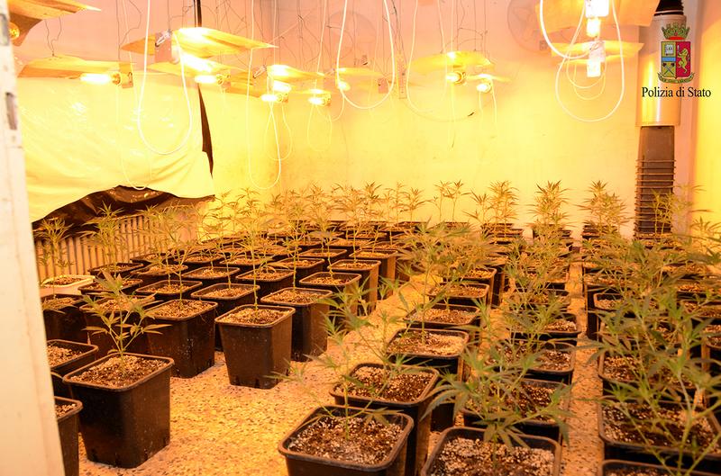cinese-coltivava-1-640-piante-di-marijuana-in-un-casolare