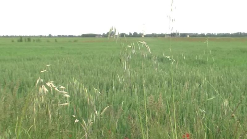 L'AGRICOLTURA DELLA BASSA SOFFRE IL MALTEMPO
