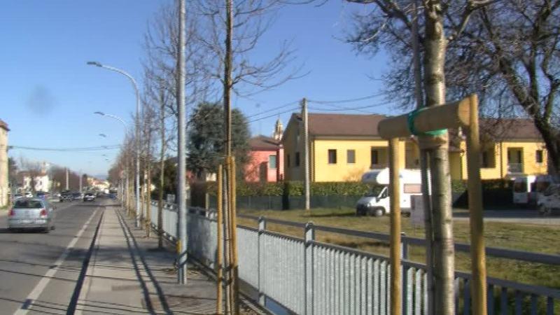 NUOVE PIANTUMAZIONI A CAMPOSAMPIERO CONTRO IL PM10