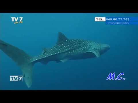 TV7 CON VOI DEL 11/02/2019 – ANDIAMO IN PAPUA
