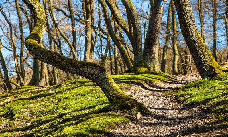 veneto-outdoor-app-per-scoprire-la-natura-veneta