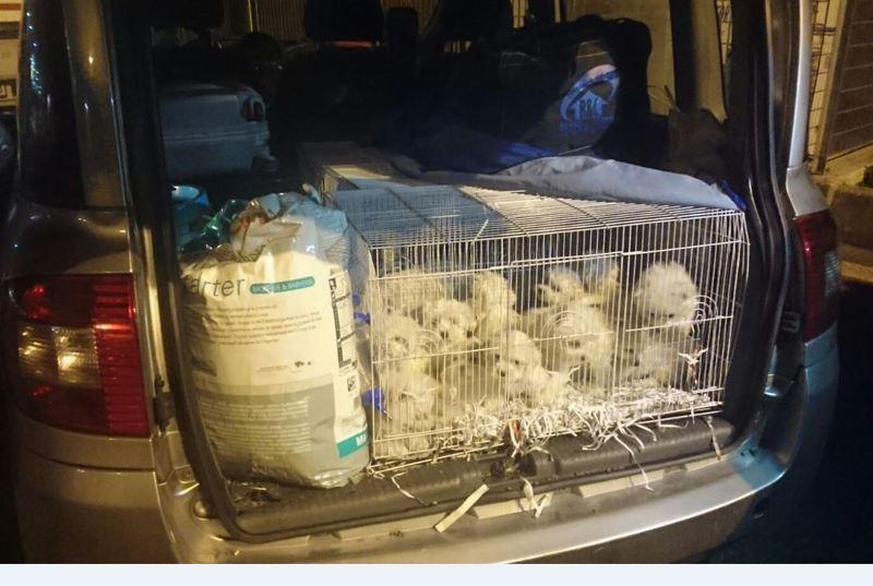venezia-contrabbando-animali-salvati-40-cuccioli-di-cane