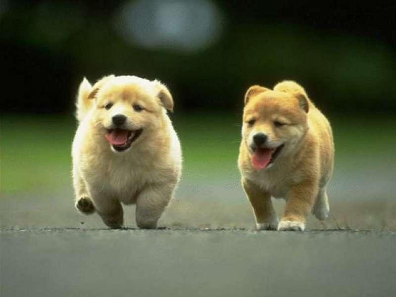 comune-veronese-solo-due-cani-mini-in-appartamento-o-uno-grande