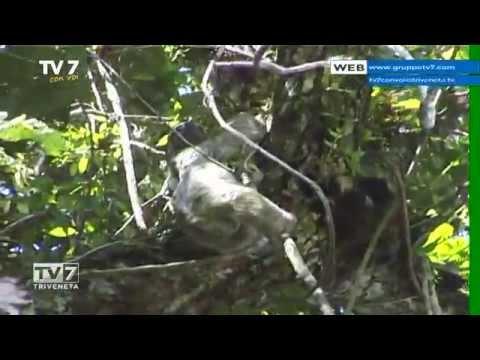 TV7 CON VOI DEL 28/05/2015 – ANDIAMO A ISLA DE COCO