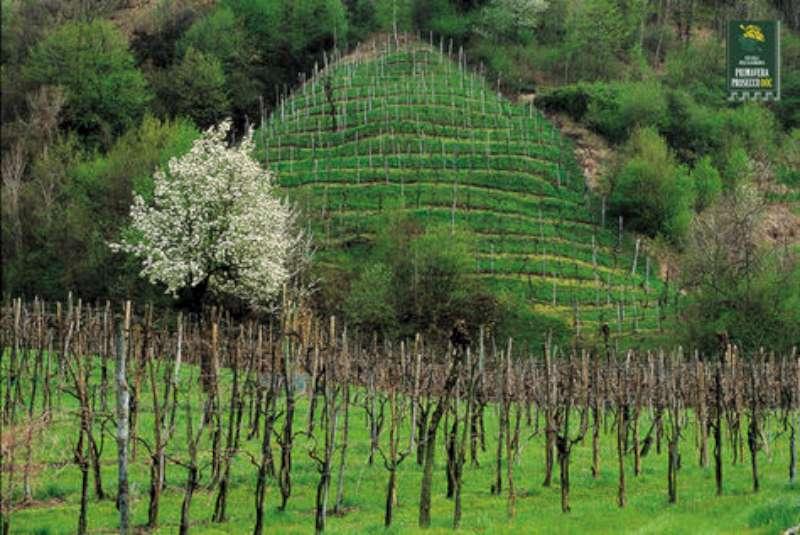 vino-prosecco-regioni-fvg-e-veneto-per-tetto-a-produzione
